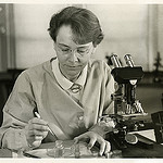 black and white photo of Barbara McClintock, famous geneticist, using her microscope (from Smithsonian)